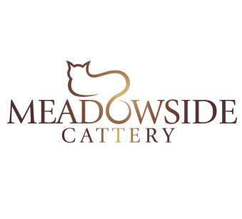 Branding, logo design and website design for Lanarkshire based cattery, Meadowside cattery.